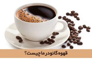 قهوه گانودرما چیست؟